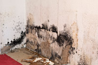 Yakima Valley Home Inspection Mold Testing